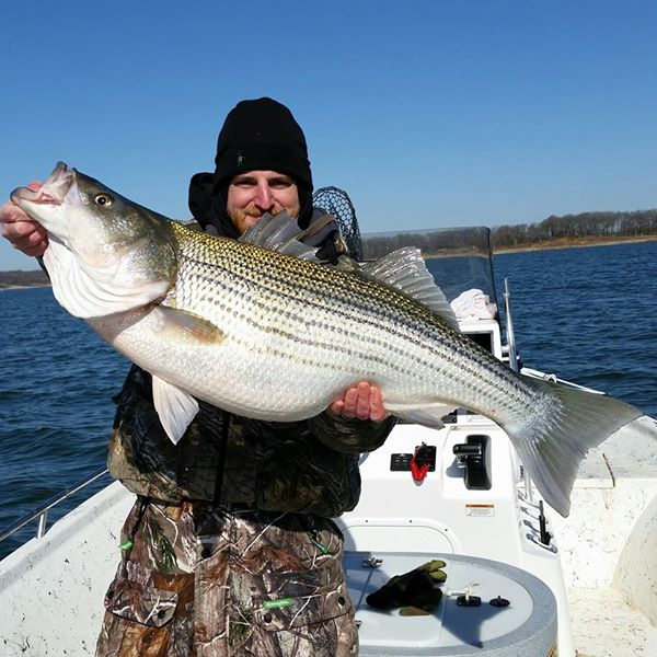 Plenty of fish reel fishing striper guide guided for Texoma fishing license