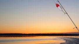 Reel Fishing Striper Guide | Fishing Rates